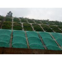 铜仁四季都可播种观赏的草种草籽