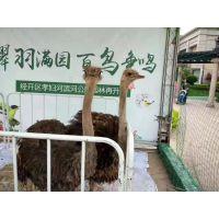 重庆百鸟展活动资源 百鸟展租赁公司