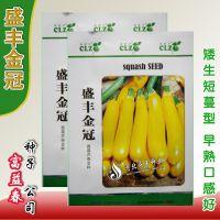 香蕉瓜种子 黄色西葫芦种子 家庭盆栽蔬菜种子 新型特菜瓜果种籽