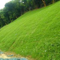 江西高速公路石质边坡绿化修复工程边坡绿化设计方案