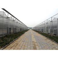 温室大棚厂家 玻璃温室 连栋温室