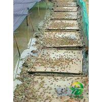 湖北天泽惠丰生态农业发展有限公司:青蛙饲养管理的及注意事项