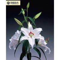 云南鲜花批发花卉花道为大家提供优质优惠的鲜花批发