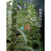 安徽种植小麦如何达到高产 小麦增产套餐