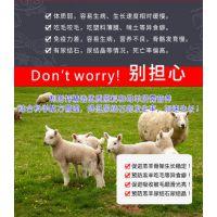 利斯特小羊饲料 小羊专用营养预混料