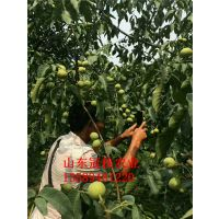 核桃树一般生长在哪个省 江西可以栽植核桃树吗