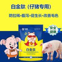 如何养猪长得快 快速养猪法 猪吃什么长得快 白金肽