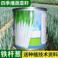 厂家批发 日本铁杆葱种子 大葱种子蔬菜种子 山东大葱种子