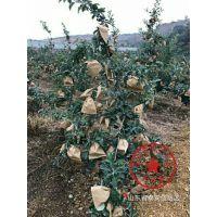 壹棵树农业 矮化苹果树苗 矮化苹果新品种怎么卖 厂家销售