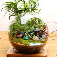 微景观生态瓶迷你盆栽苔藓植物鲜活创意盆栽办公桌摆件diy盆栽