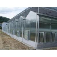 阳光板温室大棚多少钱|温室阳光板大棚造价