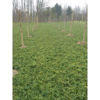 麦冬需要什么土壤 种植季节