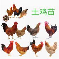 土鸡多少钱一斤,批发土鸡多少钱一斤价格优惠,成活率高长速快