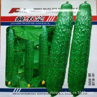 批发出售新鲜蔬菜水果种子 黄瓜种子 优质高产抗病 脆嫩商品性好