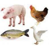 猪肉肉丸罐头肉鱼肉虾丸香肠火腿肉制品增筋改良剂