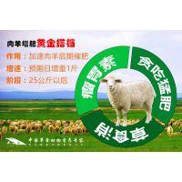 羊吃什么饲料()育肥羊前期喂什么长的快