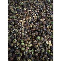 茶籽烘干房平均一小时烘干茶籽的量需要多少资金