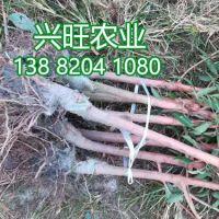 四川古羌农业有限公司