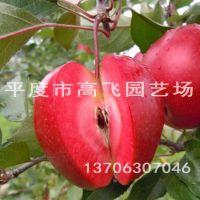 红色之爱苹果苗 红肉苹果 苹果苗多少钱