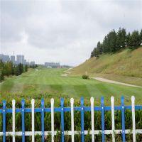 市政绿化护栏 城镇绿化带小栅栏 庭院围栏厂家