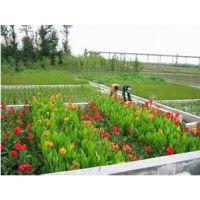 景区污水处理 人工湿地 公园城镇农村河道生活污水处理 打造景观生态乡村
