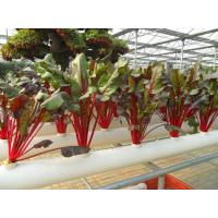 供应无土栽培新型智能温室大棚 草莓西红柿瓜果蔬菜无土栽培技术 青州泉瑞温室
