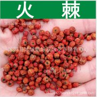 基地批发 新采苗木种子 火棘种子 质量保证 发芽率高 量大优惠