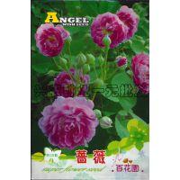 百花园蔷薇花卉种子 阳台种植 家庭盆栽园艺 植物花籽 花种子批发