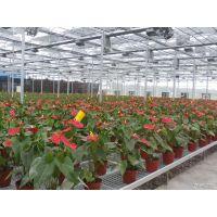 青州鑫泽供应南京玻璃智能花卉温室 玻璃连栋温室