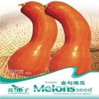 蔬菜瓜果24种南瓜种子任选 金钩南瓜种子 家庭小菜园 8粒/包