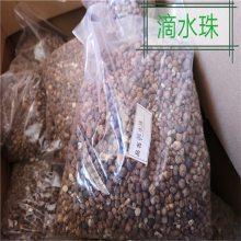 滴水珠功效与作用 独叶一枝花产地批发价格 哪里购买多少钱一公斤