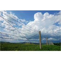 绿色铁丝网@泰安果园绿色围栏网@养殖护栏网厂家销售