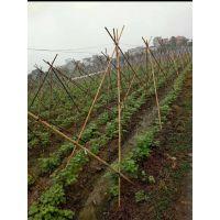 迪吉山药架网 植物攀爬网 100米白山药搭架网 豆角网 黄瓜网 百香果网