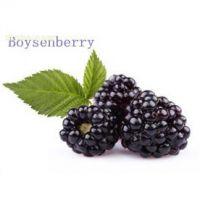 进口博森莓浓缩汁厂家供应