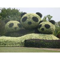 国宝大熊猫仿真绿雕造型 萌萌大熊猫一家绿雕定制