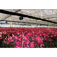 花道花卉种植基地直销鲜花产品没有中间商赚差价