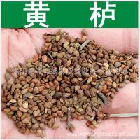 批发风景树种子 红栌种子 黄栌种子 林木种子 颗粒饱满 量大优惠