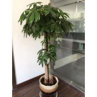 北京绿植租摆公司北京花卉销售