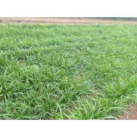 抗腐生根效果好的菌肥 茄子西红柿黄瓜全水溶菌肥价格