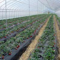 厂家批发蔬菜种植塑料保温大棚 热镀锌钢管简易连栋大棚
