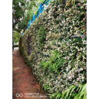 餐厅装饰植物墙制作 仿真植物墙 真植物墙