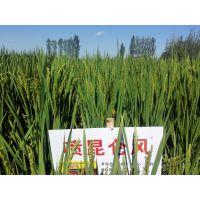 防治小麦赤霉病的套餐 昆仑风小麦高产套餐