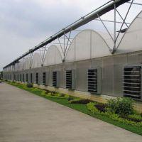 厂家批发热镀锌钢管花卉薄膜温室大棚 定制蔬菜连体薄膜温室大棚