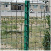 电焊网荷兰网 福州荷兰网 养殖围栏网多少钱一米