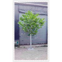 高仿真白桦树组合景观  韩系风植物小景点   室内高仿真植物摆件