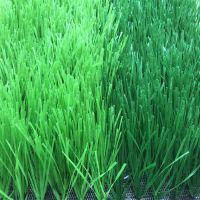 高尔夫球场假草坪价格 德州假草坪 成都仿真草皮