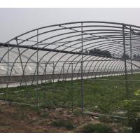 梅州_水果温室大棚椭圆管厂家_低价促销