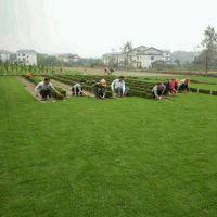 马尼拉草皮 广西贵港庭院绿化用的真草坪批发价格 铺种方法