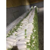 供应出口蔬菜保鲜白萝卜white radish生鲜大根萝卜胡萝卜订单日本东南亚俄罗斯中东