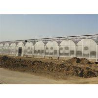河北张家口薄膜温室大棚的建设厂家,盛鸿温室一站式温室大棚建设